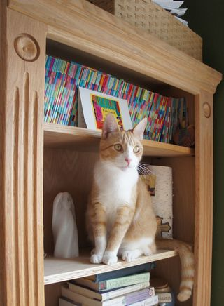Archie in shelves