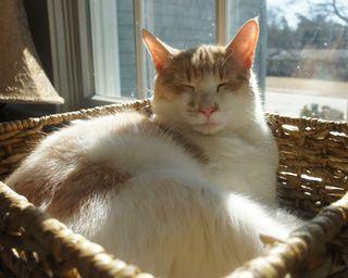 Ollie in sunny basket