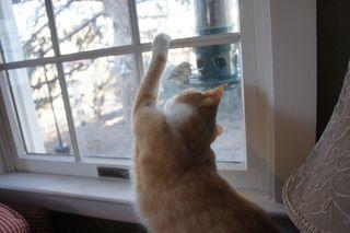 Archie hunting birdies