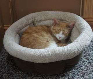 Archie in cat bed