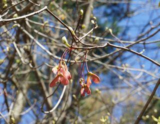 Fine spring day 15