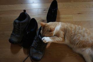 Archie stinky sneaker 4