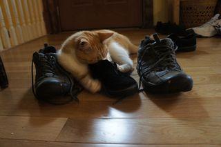 Archie stinky sneaker 7