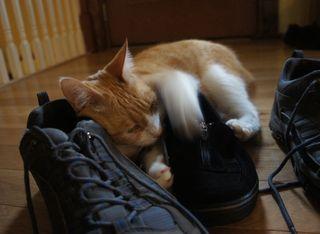 Archie stinky sneaker 8