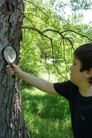 Magnifying tree