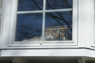 Ollie in front window