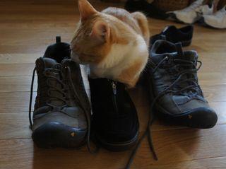 Archie stinky sneaker 6