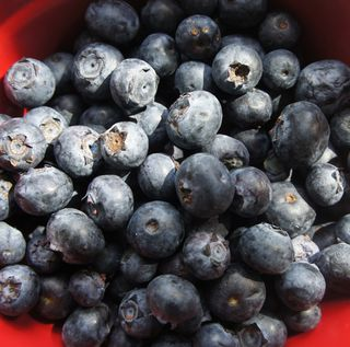 Blueberries for b week