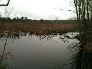 March pond 2