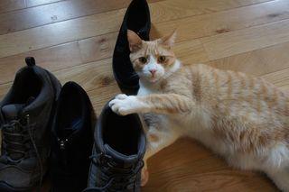 Archie stinky sneaker 3