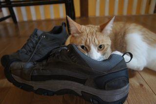 Archie stinky sneaker 10