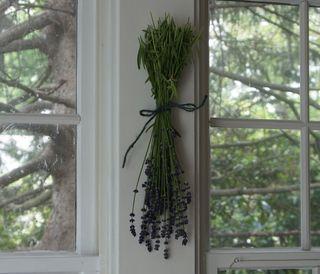 Lavender sprig 1