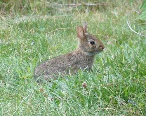 Wee bunny 1
