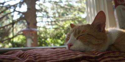 Sleeping archie 1