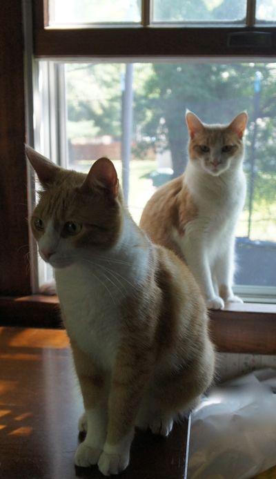 Archie & ollie big boys