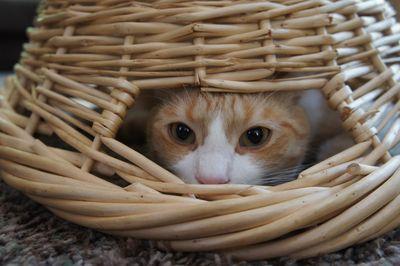 Archie under basket