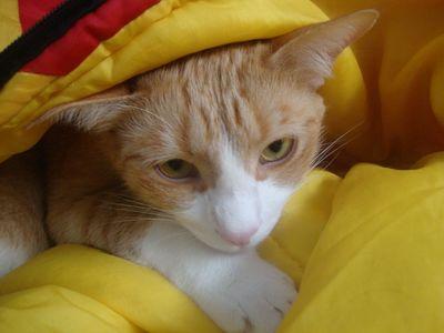 Archie sleeping bag 1