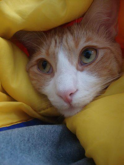 Archie sleeping bag 5