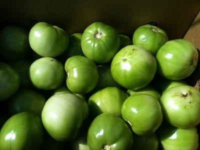 Green tomatoes 1