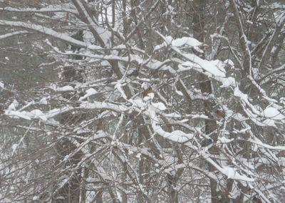 Blizzard morning 5