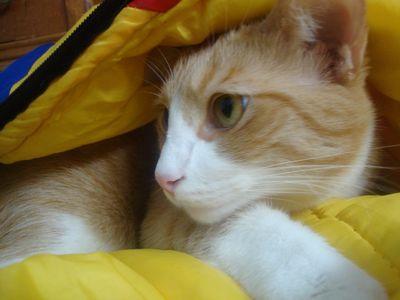 Archie sleeping bag 2