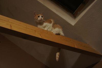 Ollie on beam 3