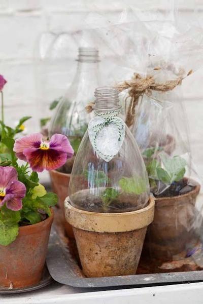 Plastic bottle terrariums