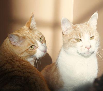 Kitties january 2013