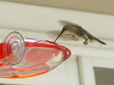 Hummingbird at new house 2