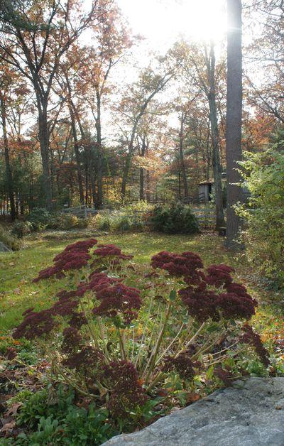 Autumn sunshine yard