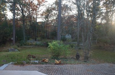 Autumn sunset with chickens