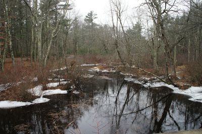 Frozen creek 1