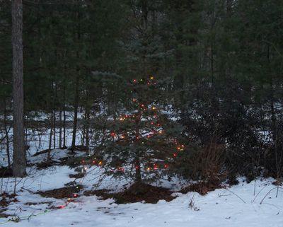 Charlie brown tree 1