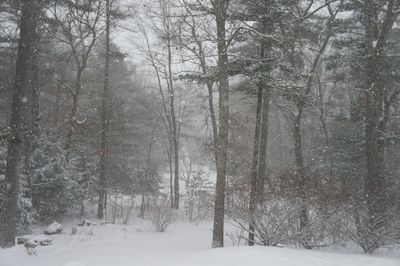 Snowstorm driveway 1