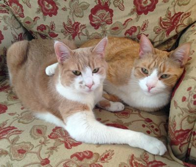 Cats on chair together 4