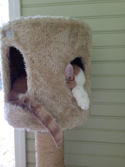 Feline friday 4
