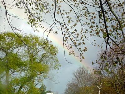 Rainbow spring trees