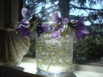 Violets in jar