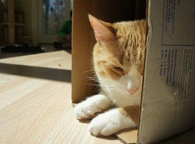 Ww archie in box