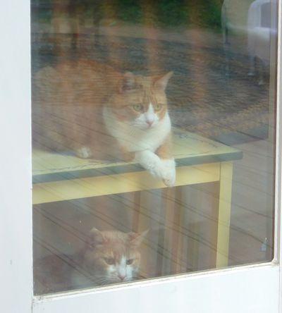 Kitties hunting 2