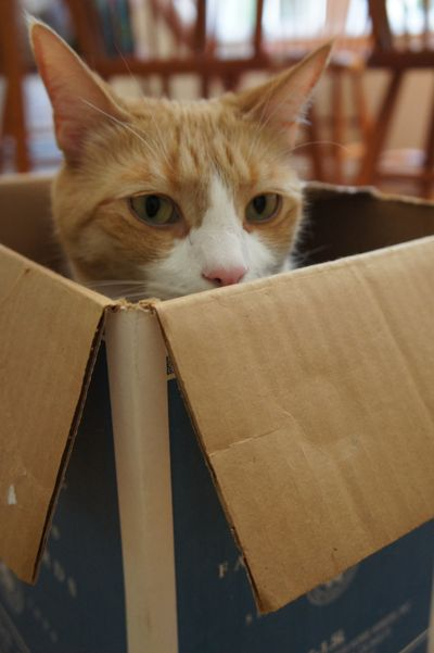 Archie in wine box 1