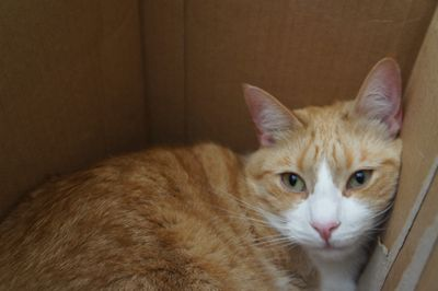 Archie in wine box 3
