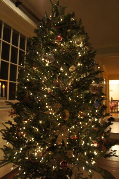 Tree up 2