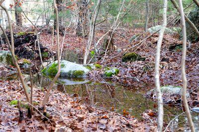 Icy creek 4