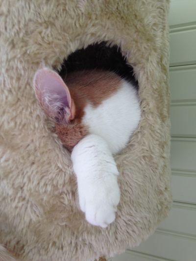 Feline friday 2