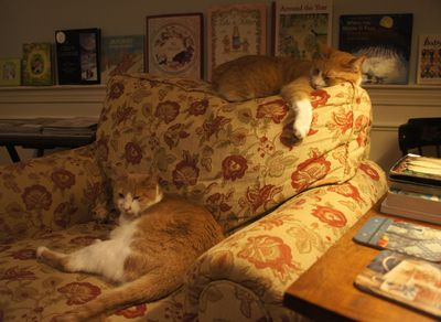 Cats on chair together