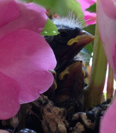 Baby birds 4