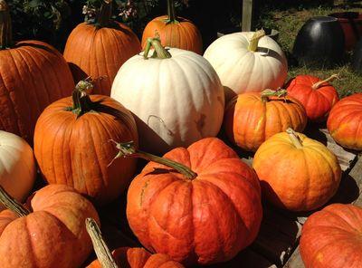 Pumpkin days 2