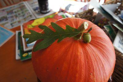 Acorn on pumpkin