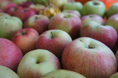 Apple bounty 1